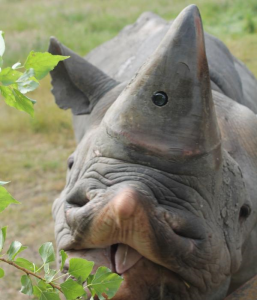 Rhino Cam_2
