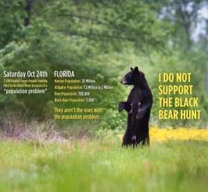 Florida Bear Numbers