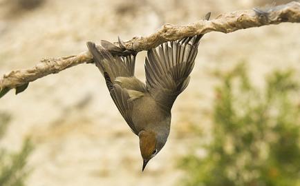 Glued Bird_2