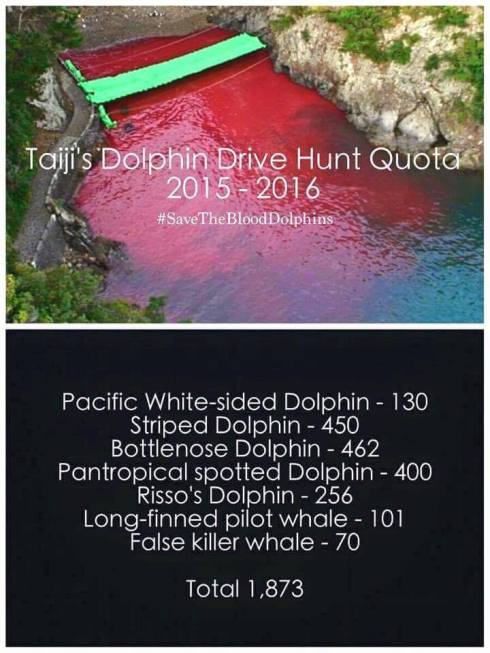 Save the Blood Dolphins
