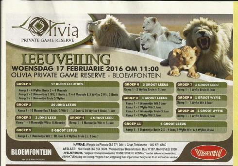 Bloemfontein Auction