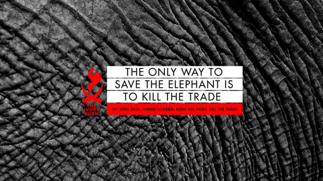 Ivory_Kill The Trade