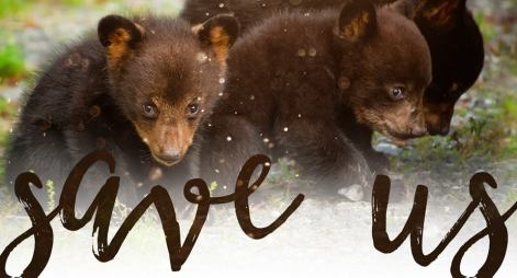 Florida Bear Hunt - Save Us