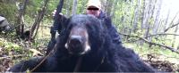 Florida Black Bear Hunt