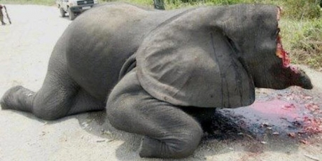 Elephant_missing-face-lg_1_460x230